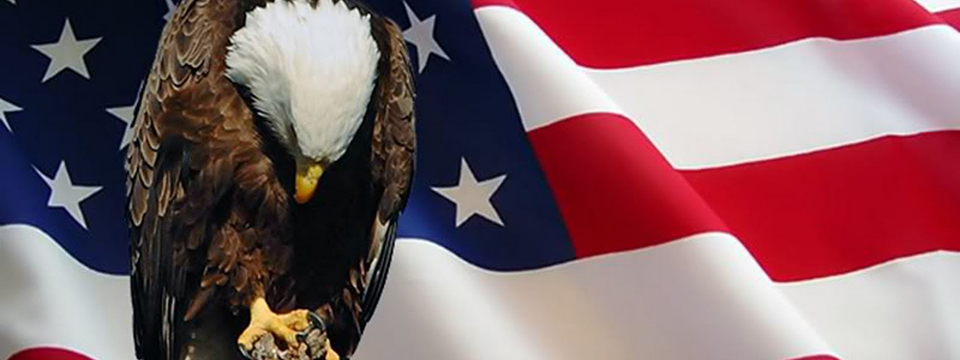 Photo of a Bald Eagle, its head bowed in deference, perched in front of the flag of the United States of America. - Flying Blind, LLC Online Store
