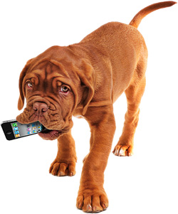 Photo of a dog with an iPhone in its mouth.